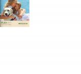 FLEX VET Canine Intraocular Implants